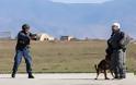 Επίδειξη σκύλων της ομάδας «Κέρβερος» στην 110 Π.Μ. - Φωτογραφία 11
