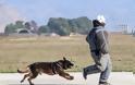 Επίδειξη σκύλων της ομάδας «Κέρβερος» στην 110 Π.Μ. - Φωτογραφία 12