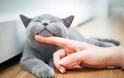Ελεύθερες οι γάτες με απόφαση της Ευρωπαϊκής Επιτροπή