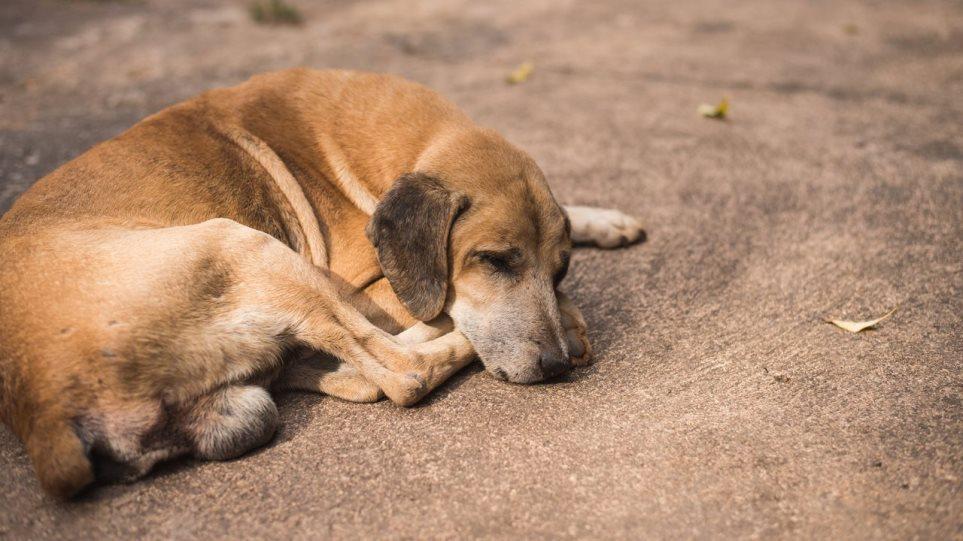 Πυροβόλησε αδέσποτο σκύλο και συγγενής του τον κατήγγειλε - Φωτογραφία 1