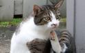 Τα πιο συχνά δερματικά προβλήματα στα ζώα συντροφιάς - Φωτογραφία 3