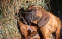Τα πιο συχνά δερματικά προβλήματα στα ζώα συντροφιάς - Φωτογραφία 4