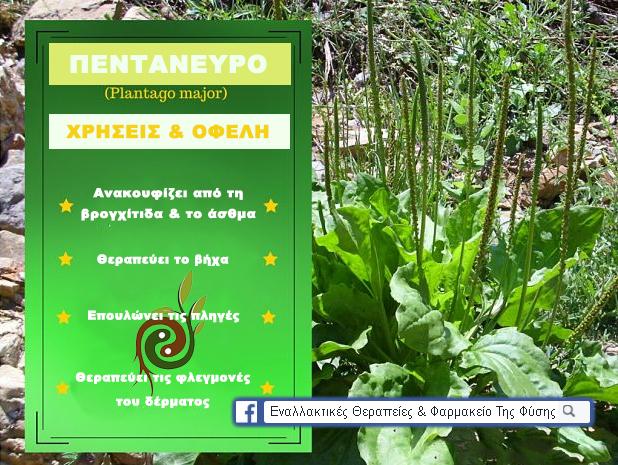 Η Γιαγιά το Αποκαλούσε «Το Φύλλο που Γιατρεύει» – Φυτρώνει σε Κάθε Κήπο και Έχει Απίστευτες Φαρμακευτικές Ιδιότητες! - Φωτογραφία 1