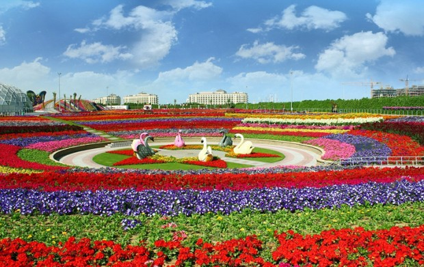 «Miracle Garden» Ο κήπος των θαυμάτων στο Ντουμπάι και δεν υπάρχει παρόμοιος σε όλο τον κόσμο. - Φωτογραφία 1