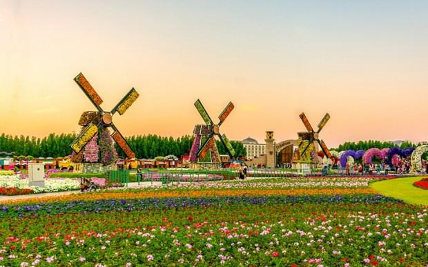 «Miracle Garden» Ο κήπος των θαυμάτων στο Ντουμπάι και δεν υπάρχει παρόμοιος σε όλο τον κόσμο. - Φωτογραφία 4
