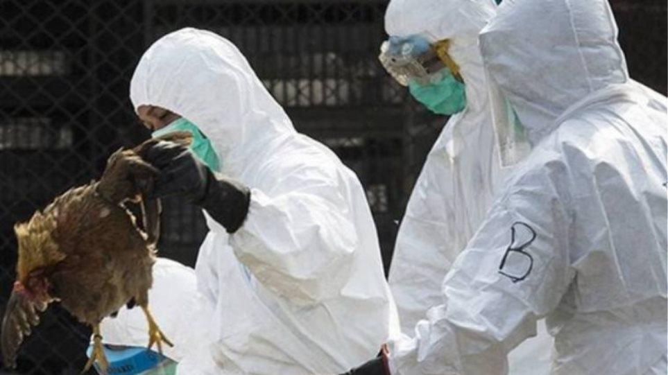 Ουγγαρία: Δεύτερο κρούσμα της γρίπης των πτηνών εντοπίστηκε μέσα σε μια εβδομάδα - Φωτογραφία 1