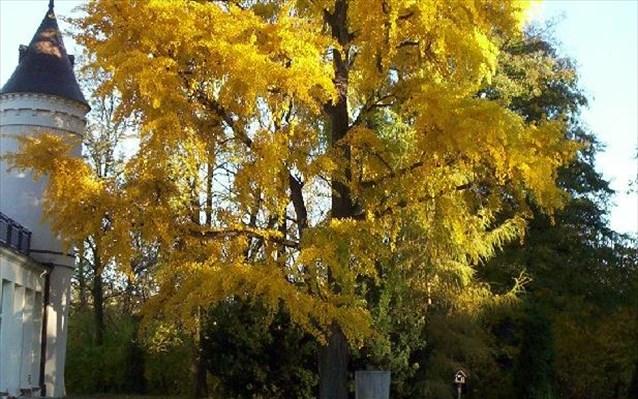 Χημικά της μακροζωίας: Αποκαλύφθηκε το μυστικό των χιλιόχρονων δέντρων - Φωτογραφία 1