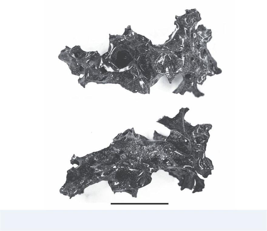 Η υψηλή θερμοκρασία από την έκρηξη του Βεζούβιου μετέτρεψε τον εγκέφαλο θύματος σε «γυαλί»! - Φωτογραφία 2