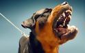 Έχασε τις αισθήσεις του και τον κατασπάραξε ο σκύλος του - Φρικτό τέλος για 35χρονο