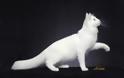 Γάτα Αγκύρας: Παιχνιδιάρα και τρυφερή, ιδανική για παιδιά και ηλικιωμένους - Φωτογραφία 4