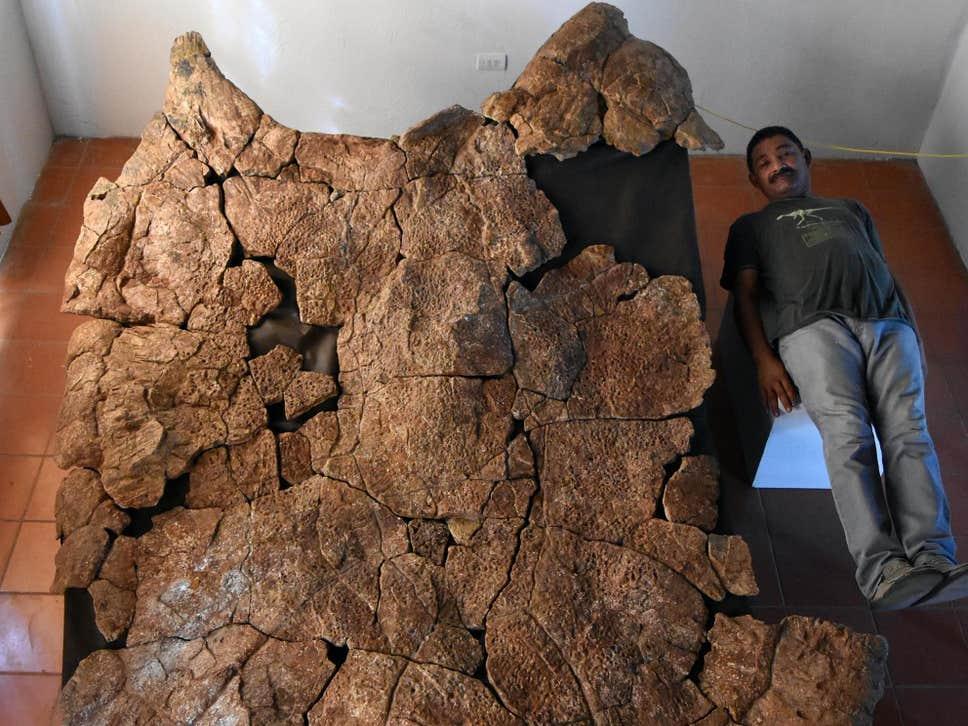Απολιθώματα γιγάντιας χελώνας ανακαλύφθηκαν στη Νότια Αμερική - Φωτογραφία 1