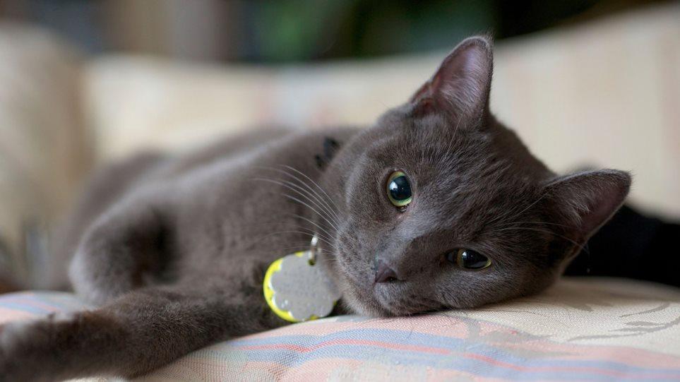 Μια γάτα υποψήφια στις δημοτικές εκλογές - Φωτογραφία 1