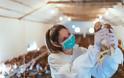 Κορωνοϊός: Γιατί κολλάμε ολοένα και περισσότερες ασθένειες από τα ζώα;