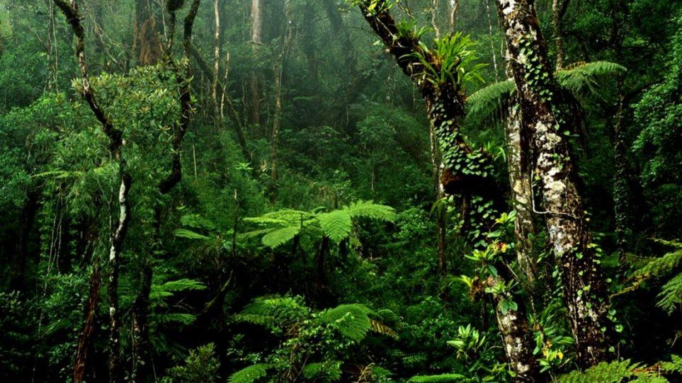 Μελέτη: Τα τροπικά δάση μπορεί να απελευθερώνουν άνθρακα - Φωτογραφία 1