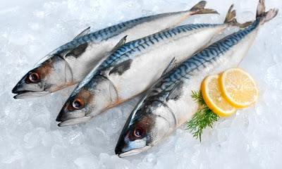 Κολιός, ψάρι πλούσιο σε ωμέγα-3 λιπαρά οξέα. Διαφορές από το σκουμπρί. ΠΟΤΕ τον Αύγουστο! - Φωτογραφία 2