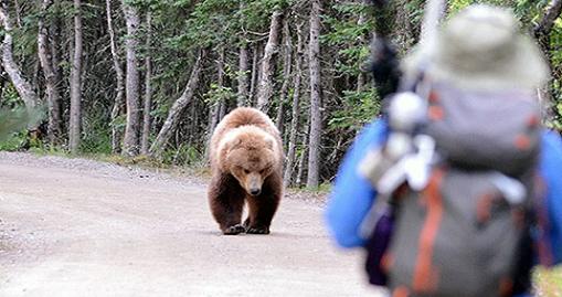Καστοριά: Eπίθεση αρκούδας σε νεαρό - Mε σοβαρά τραύματα στο νοσοκομείο - Φωτογραφία 1