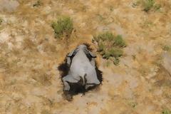 Εκατοντάδες ελέφαντες πεθαίνουν στην Μποτσουάνα από άγνωστη αιτία