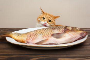 Γάτα: Τι να τρώει για να έχει λαμπερό και υγιές τρίχωμα - Φωτογραφία 3