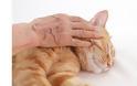 Γάτα: Αλλάζουν οι διατροφικές της ανάγκες καθώς μεγαλώνει;