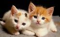 Οι γάτες είναι καταπληκτικοί φίλοι, σύντροφοι και πολύ καλοί θεραπευτές - Φωτογραφία 2