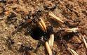 Το μυρμήγκι περιμένει να γίνη το σιτάρι, και η κενοδοξία να συναχθή ο πνευματικός πλούτος...