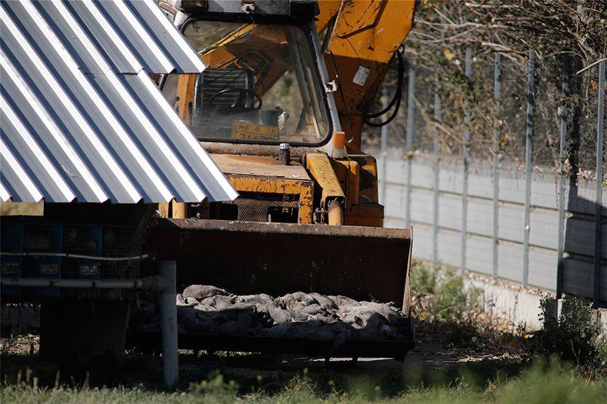 Κοζάνη: Ξεκίνησε η θανάτωση 2.500 μινκ που βρέθηκαν θετικά στον κορωνοϊό - Φωτογραφία 3