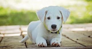 Κατά 78% αυξάνεται η πιθανότητα να κολλήσουν κορονοϊό όσοι βγάζουν τον σκύλο βόλτα - Φωτογραφία 1