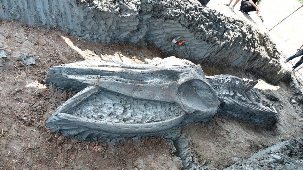 Σημαντική ανακάλυψη στην Ταϊλάνδη: Βρήκαν 12 χλμ από την ακτή σκελετό φάλαινας 5.000 χρόνων (φωτο) - Φωτογραφία 1