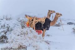 BINTEO.Χιόνισε στη Σαχάρα - Στους -2 βαθμούς η θερμοκρασία στη Σαουδική Αραβία
