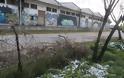 «Ξέφραγο αμπέλι» οι παλιές αποθήκες του ΟΣΕ στη Λάρισα. Εικόνες. - Φωτογραφία 5