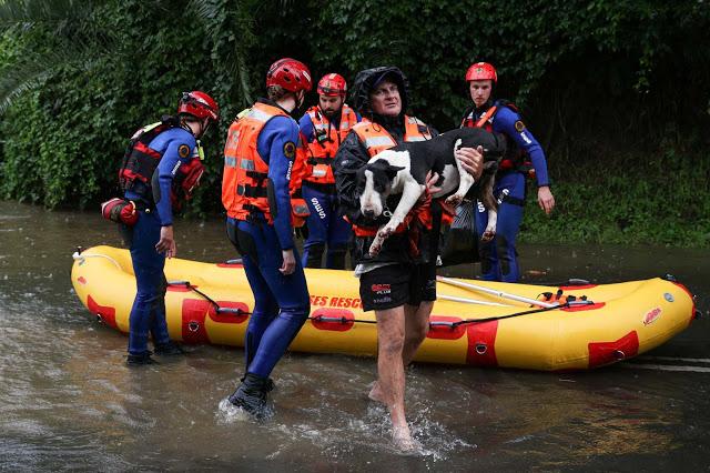 Σίδνεϊ: Σπαρακτικό γαύγισμα από εγκλωβισμένα σκυλιά για να σωθούν από τις πλημμύρες - Φωτογραφία 1