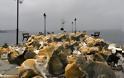 Απίστευτες εικόνες σε Αστακό και Βόνιτσα, εκατοντάδες γάτες στις παραλίες.