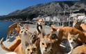Απίστευτες εικόνες σε Αστακό και Βόνιτσα, εκατοντάδες γάτες στις παραλίες. - Φωτογραφία 2