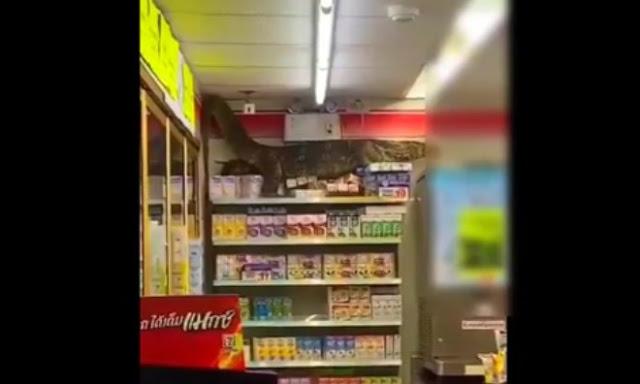 Γιγαντιαία σαύρα κάνει άνω κάτω σουπερμάρκετ (Video) - Φωτογραφία 1