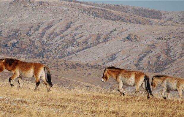 Απειλούμενα είδη επιστρέφουν στην άγρια φύση - Το στοίχημα των περιβαλλοντολόγων - Φωτογραφία 1