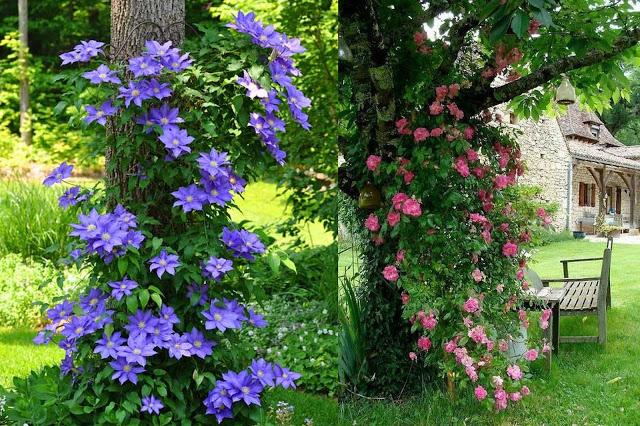 Παρτέρια κάτω από δέντρα. Ιδέες διαμόρφωσης - σχεδιασμός - Φωτογραφία 18