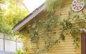 Καλοκαιρινές διαμορφώσεις για  Κήπο - Μπαλκόνι - Φωτογραφία 38