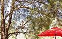 Προσθέστε Κόκκινες ...πινελιές στην αυλή ή το μπαλκόνι σας - Φωτογραφία 32