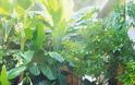 Διαμορφώσεις για μικρούς κήπους - αυλές - Φωτογραφία 35