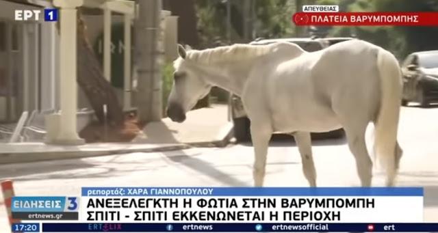 Βαρυμπόμπη: Άλογα έτρεχαν πανικόβλητα μέσα στην πλατεία - Συγκλονιστικές εικόνες (Video)
