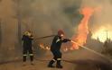 Φωτιά Λακωνία: Καμένη γη, νεκρά ζώα και κατεστραμμένες περιουσίες στη Μάνη
