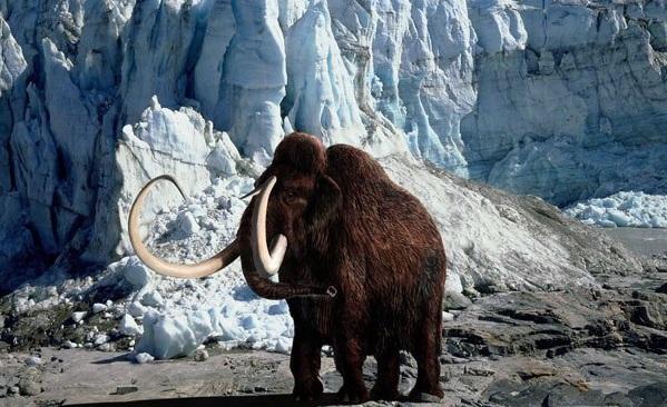 Γενετική:  Θέλουν να αναδημιουργήσουν τα μαμούθ - Ανησυχούν οι επιστήμονες - Φωτογραφία 1
