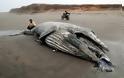 Άδοξο τέλος για έναν γίγαντα των θαλασσών - Φωτογραφία 2
