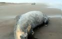 Άδοξο τέλος για έναν γίγαντα των θαλασσών - Φωτογραφία 3