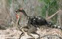 Επιστήμονες βγάζουν στη φόρα την ερωτική ζωή των δεινοσαύρων (pics) - Φωτογραφία 2