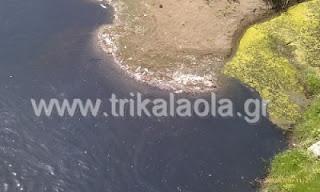 Εκατοντάδες νεκρά ψάρια στον Πηνειό ποταμό στα Τρίκαλα - Φωτογραφία 1