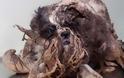 ΔΕΙΤΕ: Το πρώτο κούρεμα ενός σκύλου