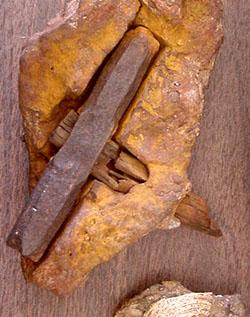 ΔΕΙΤΕ: Σφυρί μέσα σε βράχο 75 εκατομμυρίων ετών. - Φωτογραφία 1