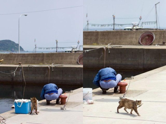 Πώς έχει προκύψει η έκφραση είναι γάτα... - Φωτογραφία 2