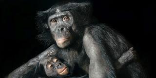 Ζώα από την ανθρώπινη τους πλευρά! (ΦΩΤΟ) - Φωτογραφία 1